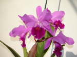 Theorchid.com